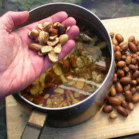Wild food - processing acorns to remove tannins